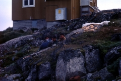 Atammik - Greenland - 1976 - Foto: Ole Holbech