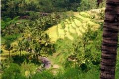 Tenganan - Bali - Indonesia - 1993 - Foto: Ole Holbech