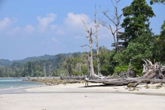 Elefant Beach - Havelock Island - India - 2018 - Foto: Ole Holbech