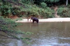 Kandy – Sri Lanka – 1987 - Foto: Ole Holbech