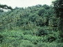 Windward - Grenada - 1981