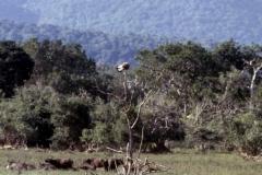 Yala National Park - Sri Lanka - 1987 - Foto: Ole Holbech